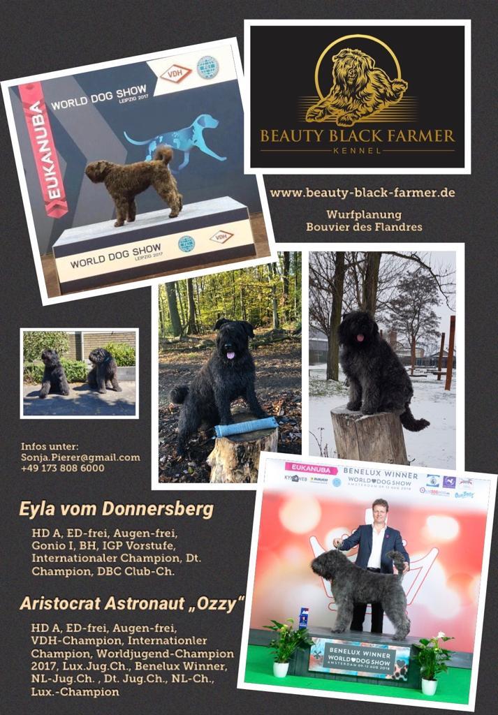 Wurf Eyla und Ozzy Hund Bouvier 2020